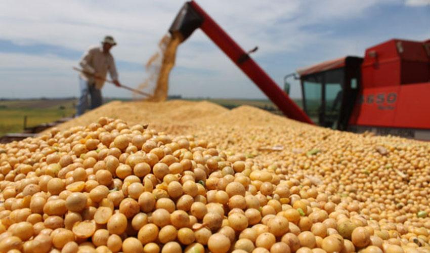 Produção de soja e milho tem expectativas de crescimento no Piauí